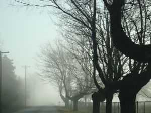 misty_morning